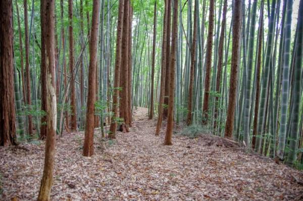 人生で初めて、こんな綺麗な竹林を見た