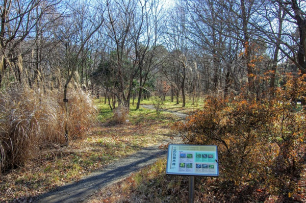 現在は庭園の他に雑木林として公開されていた