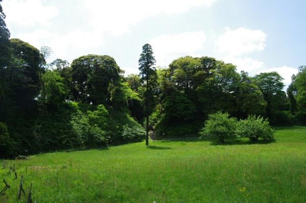 杉の先には、城山と奥ノ山の間に設けられた大堀切がある
