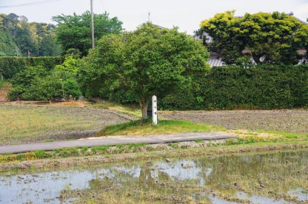 土方のバス停脇の田んぼを見渡すと白い標柱が見えた