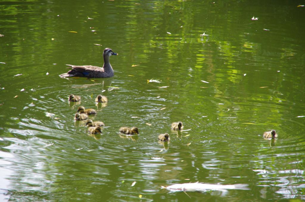 溜池公園にある池で、かっては外堀だったらしいが、現在は何の変哲もない釣り堀池になっていた