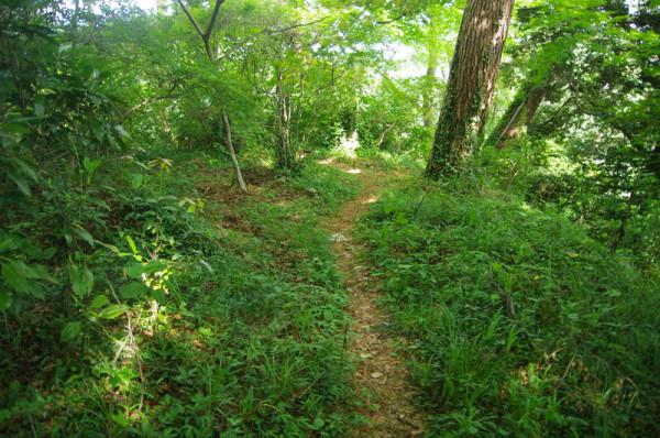 堀切跡を利用してハイキングコースが唐沢山の南へ伸びていた