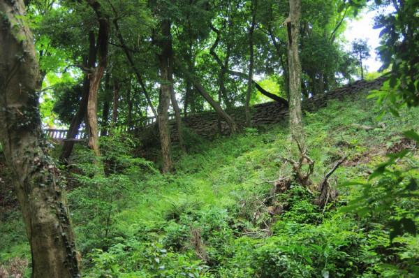 車井戸あたりから見上げた本丸の東側城壁で比高は約42mほど
