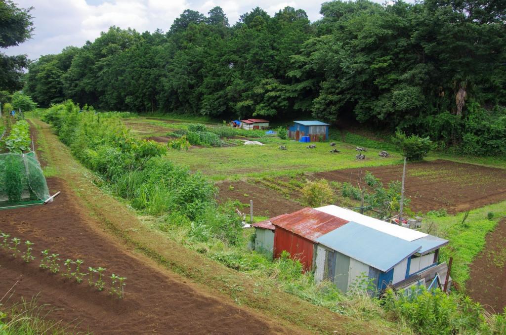 現在は畑になっているが、その堀底と向こう(洞昌院)側の土塁がいかにもと思わる地形である