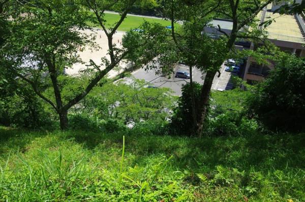 こちらは本丸跡から見ろした大井戸(藪化でかなり分かりづらいが)