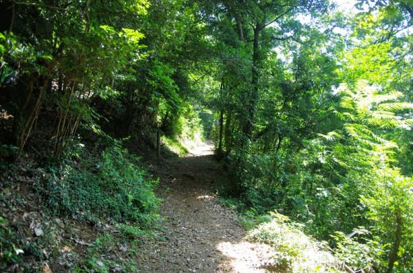 旧大手道からそれて山頂の郭へ向かう登山道
