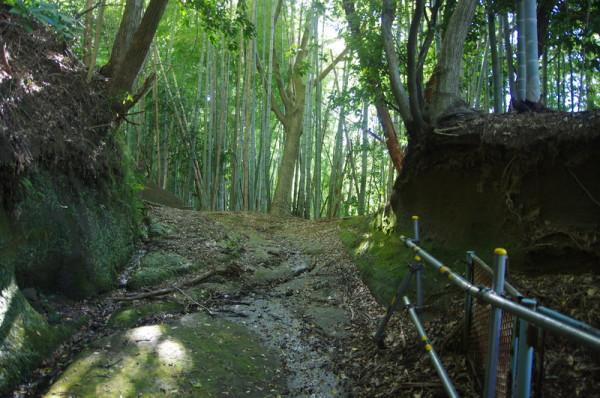 完全な野良山道ではなく少しは整備されていた