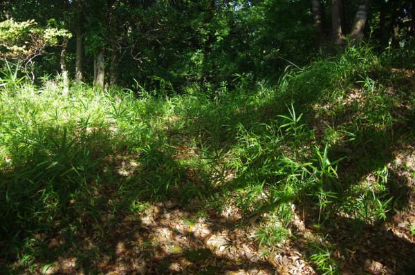 発掘調査された土塀は一部が途切れていることが判明し虎口と推定される