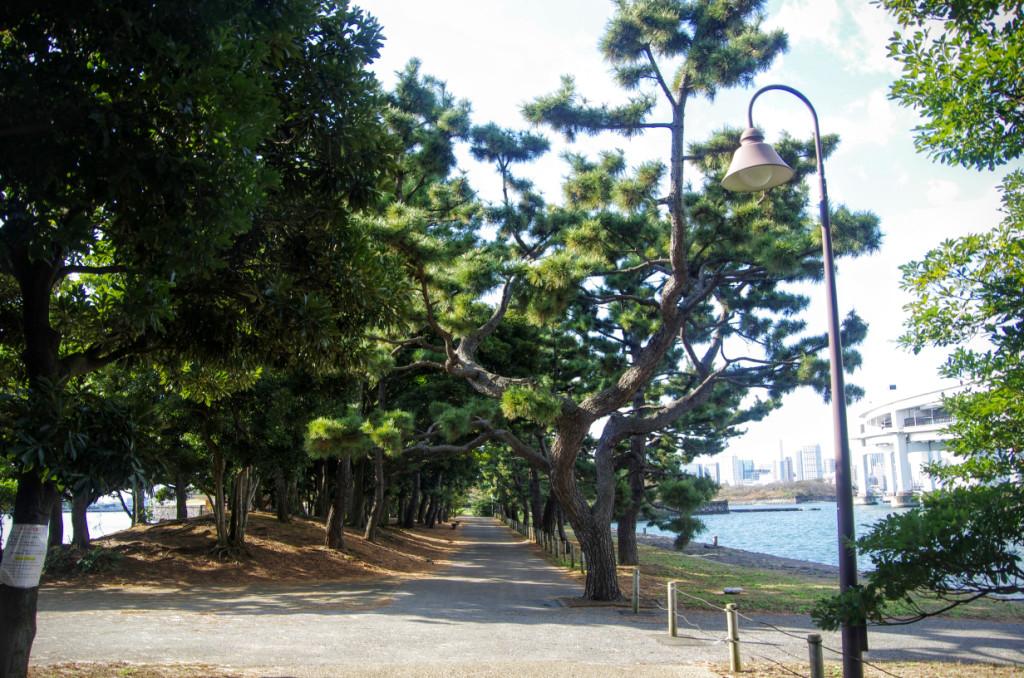 品川台場は明治時代には大日本帝国軍の管轄だったが大正時代に東京府に払い下げられると国指定史跡になった