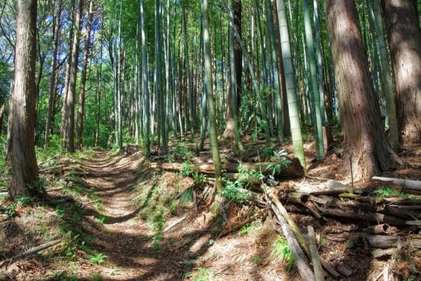 特に急坂ではないが、土壇や石積みや削平地が残っていた