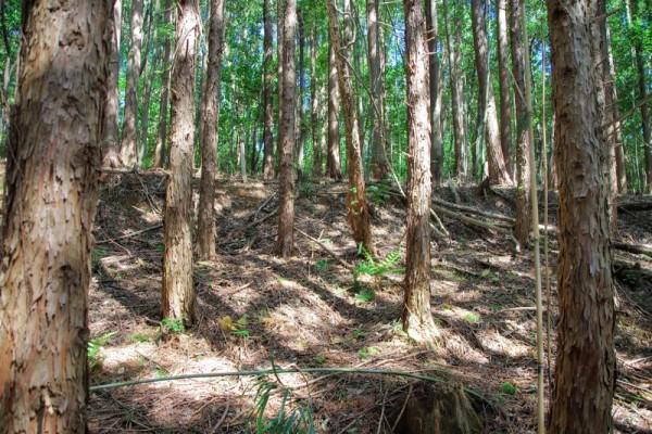 木々が少々邪魔だが、陣地っぽい形状が残っていた