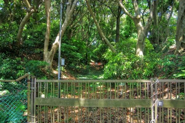 ハイキングコースから鉄柵越しに東京大学の敷地方面を見たところ