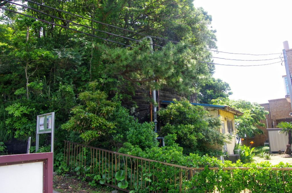 左手の杜と小屋との間に崖が少し見えるが、この小屋側に貯蔵庫となる洞窟の入口がある