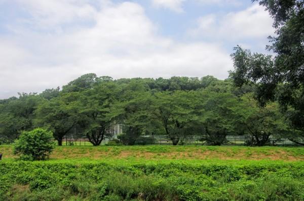 天然の外堀ごしに眺めた城址南側は比高20mほどの段丘であった