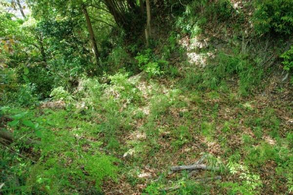 畝で区切られた横堀の西側で、この先は竪堀に変化していた